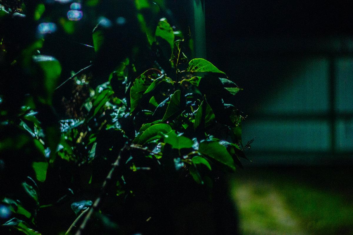 Сирень в ночи - Андрей Наумов