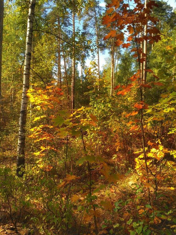 Осенняя палитра - Aleksandr Shishin