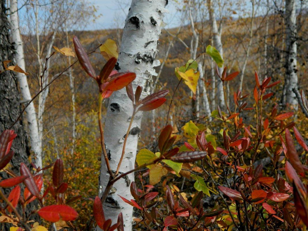 яркая осень - Анна