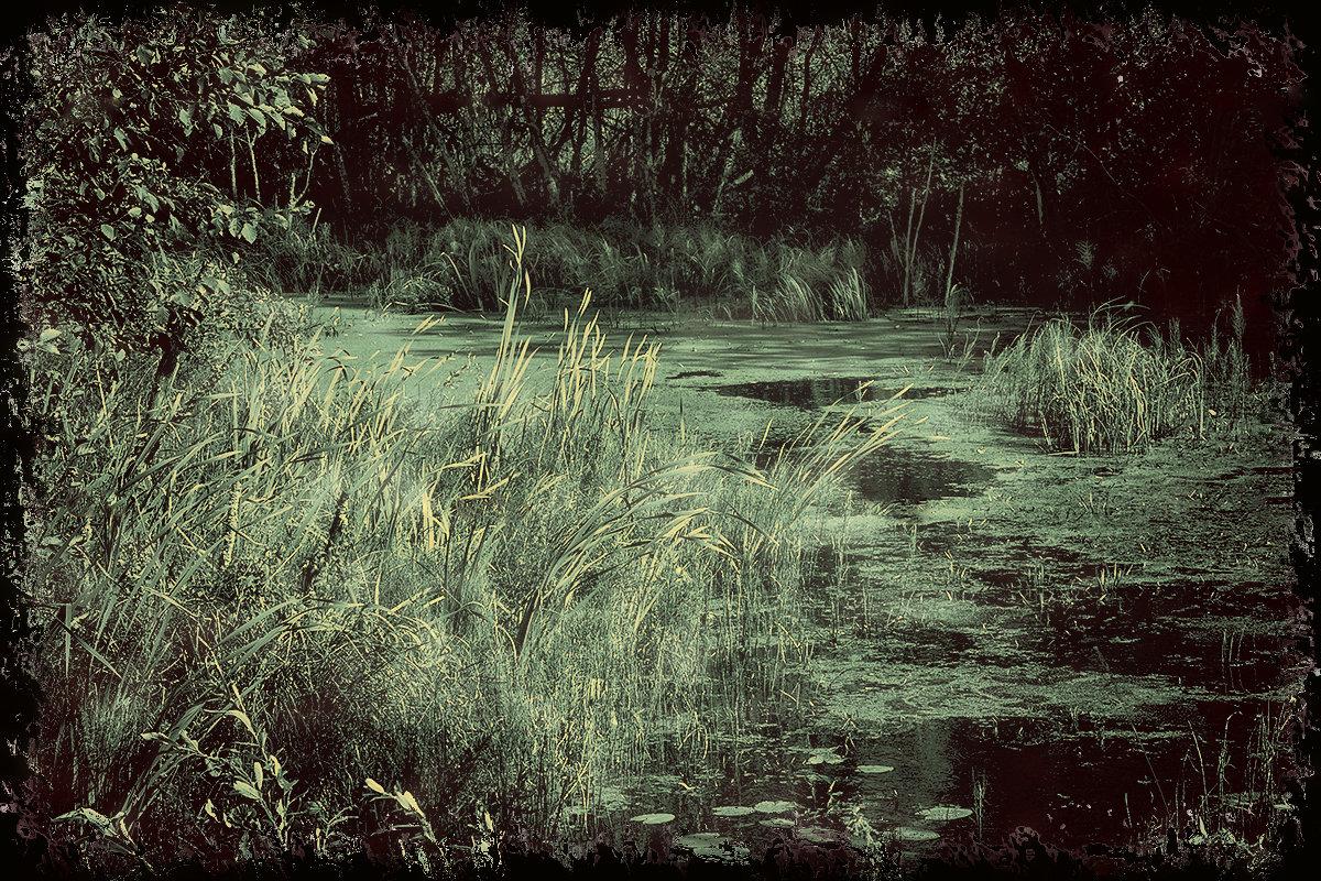 Любимое болотце - Татьяна Смирнова