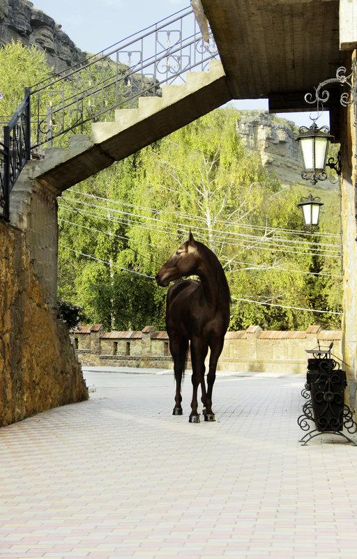 Пегий конь Карачаевской породы - Ольга Гудым