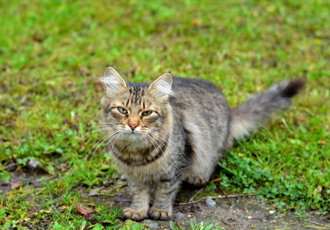 Кошка с грустью в глазах... - Марина Романова