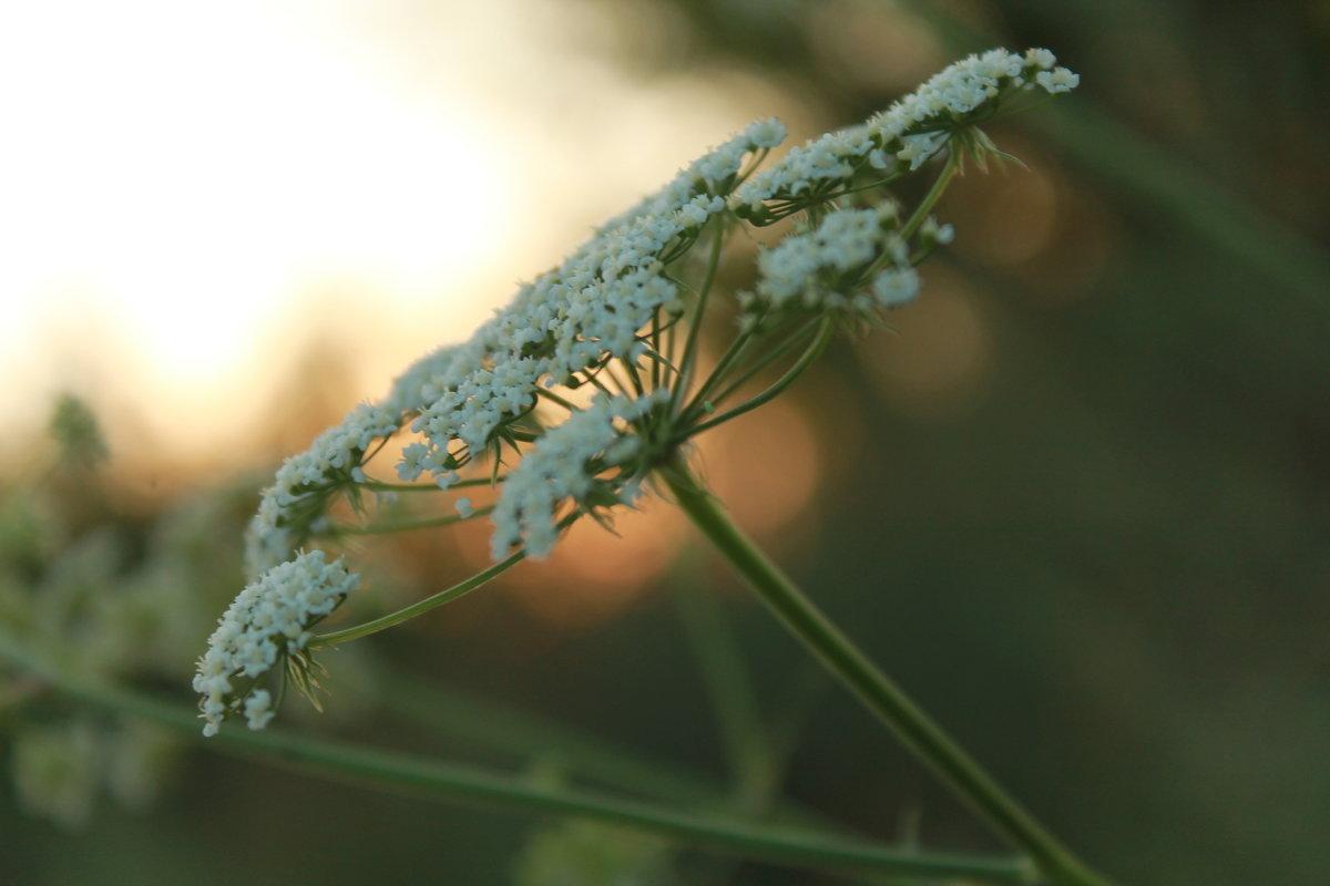 Цветок - Ксения Куценко
