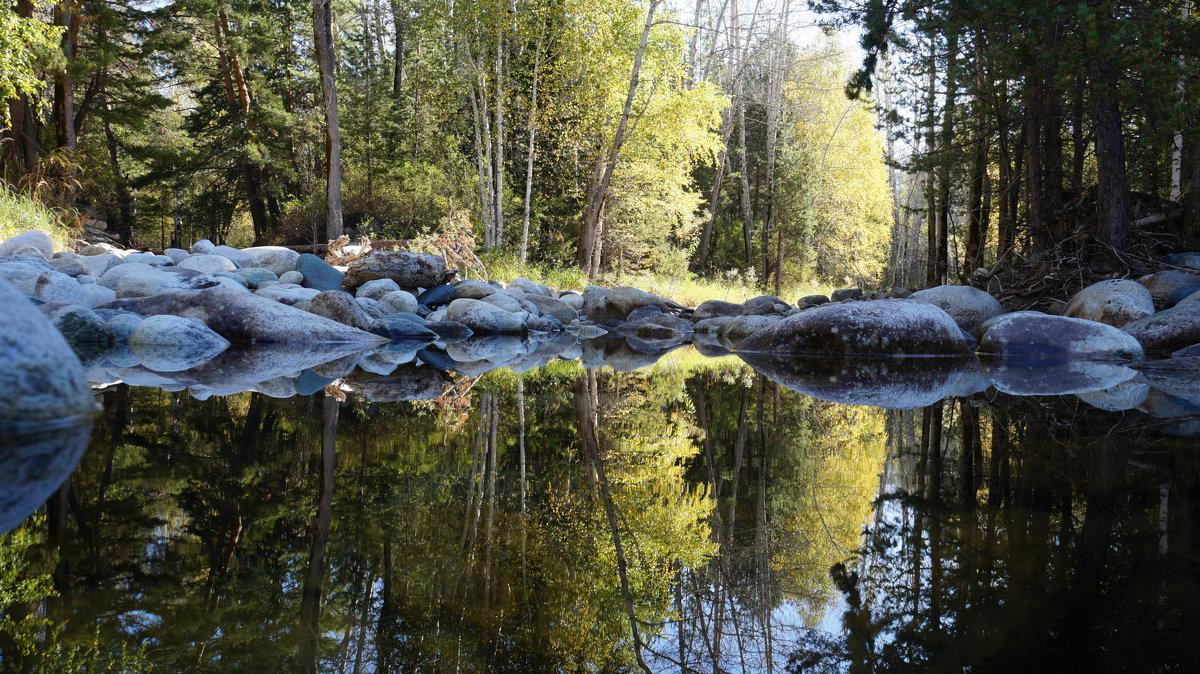 утро в лесу - Alexandr Staroverov