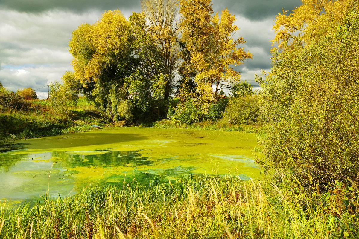 Осень  на  старом пруду - Алла ************