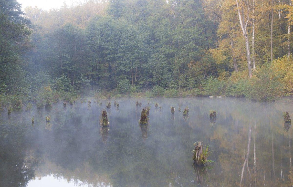 Туманное утро - Дмитрий