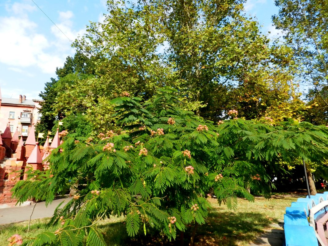 Осеннее цветение - Люша