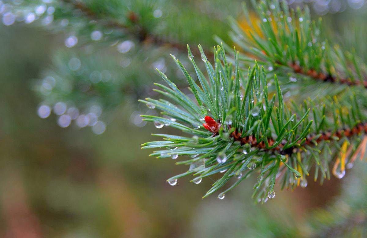 Дождь в лесу - Александр Кокоулин