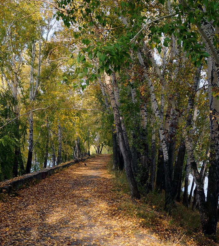 Осень пришла на аллею - Екатерина Торганская
