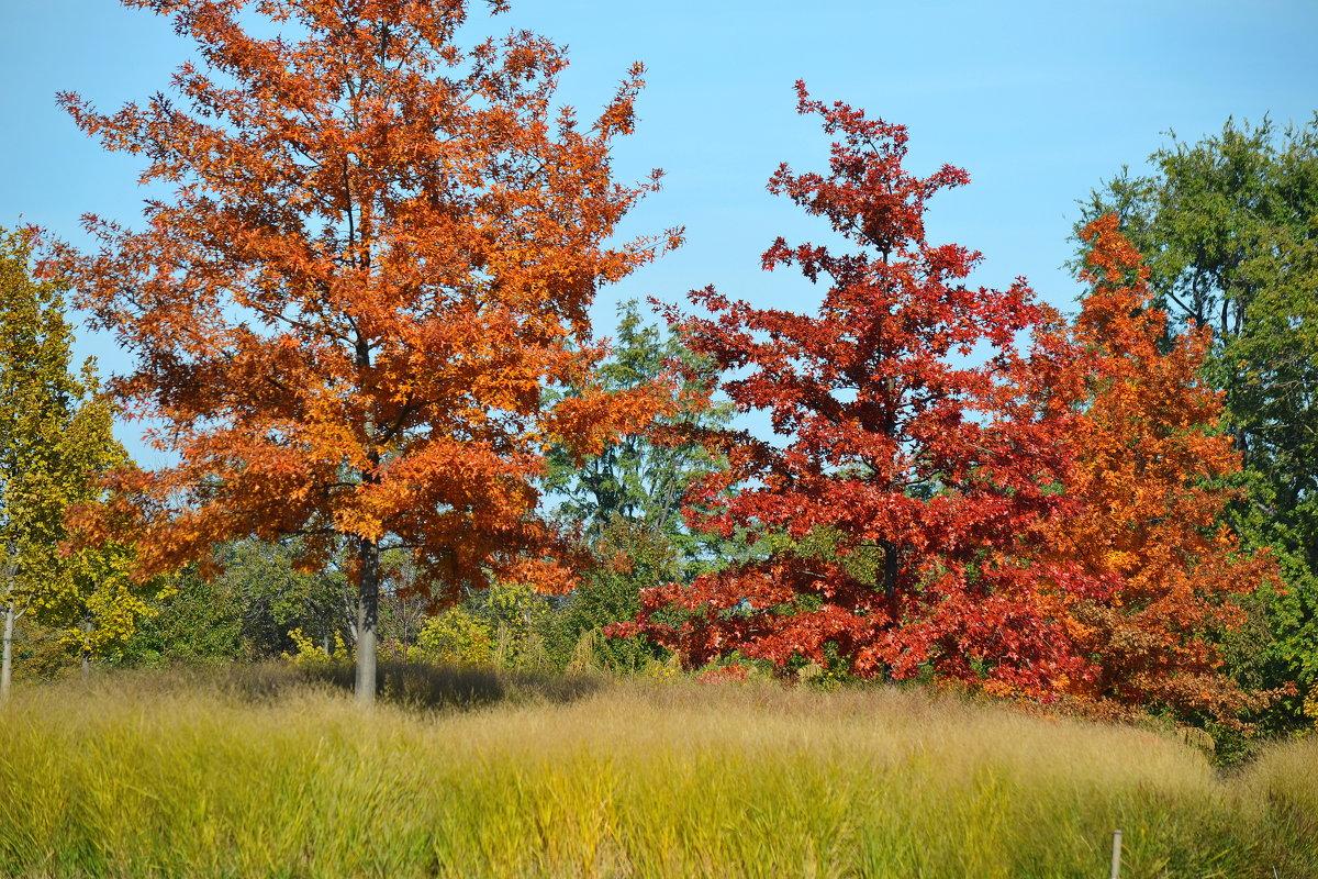 Осень - Андрей Кондратович