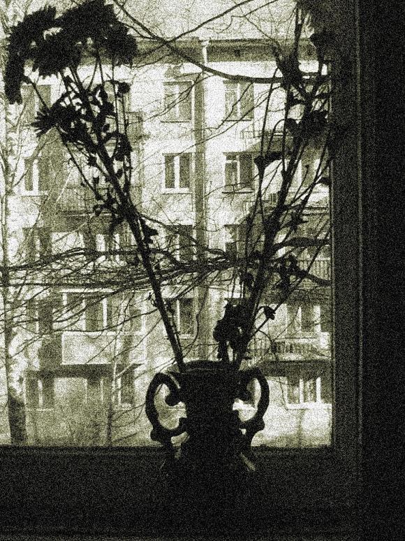 Хризантемы - Taisia_ZX