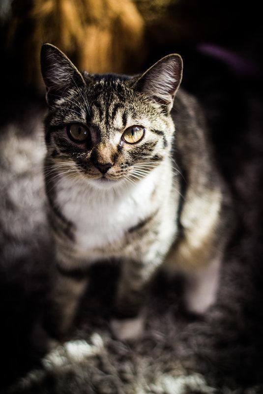 Дикая-домашняя кошка - Татьяна Зайцева