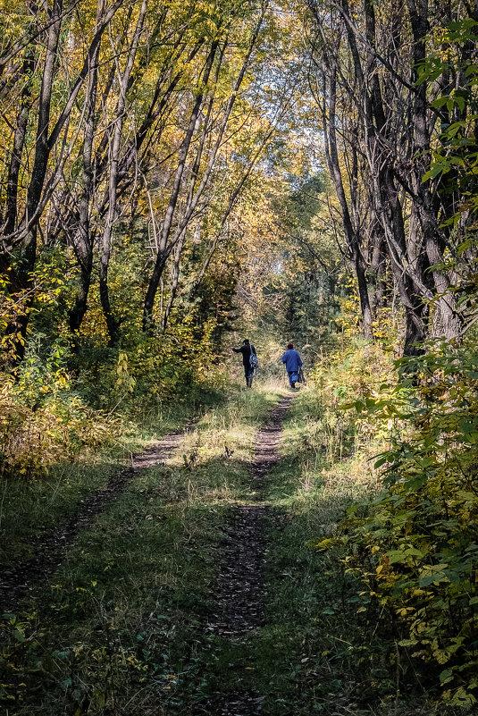 Грибники в осеннем лесу - Марк