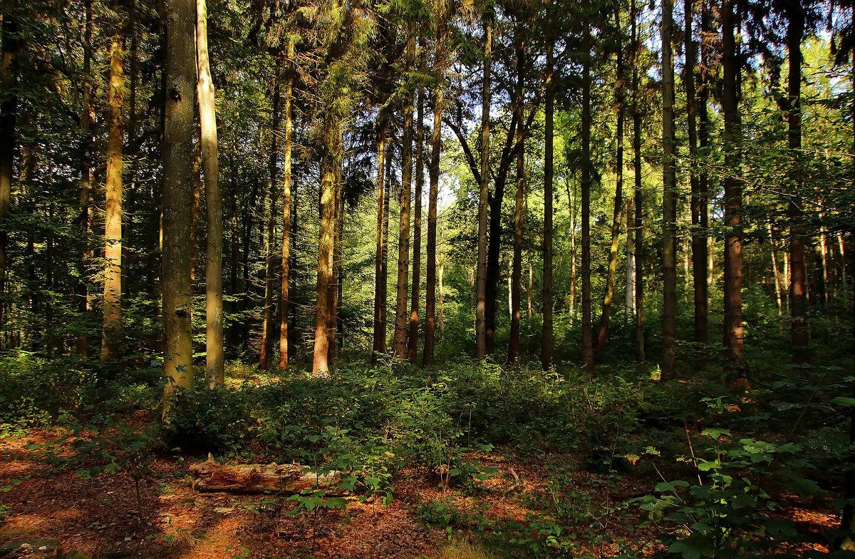 Осень в лесу - Alexander