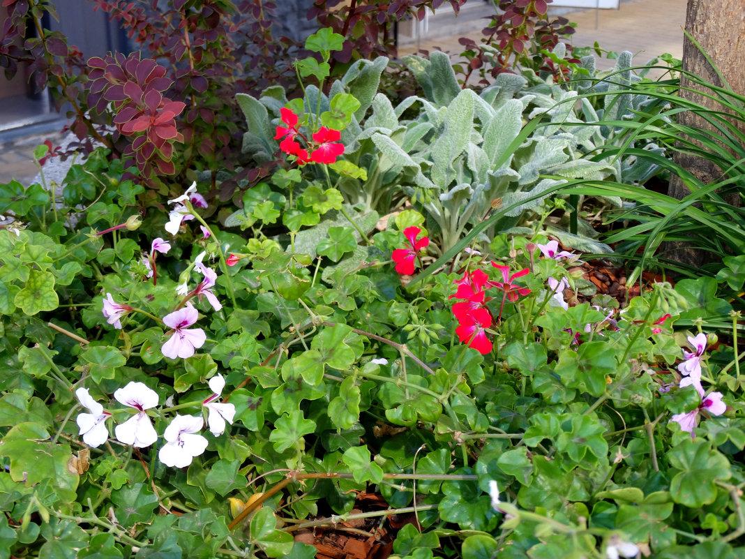 Сентябрь,городские цветы... - Тамара (st.tamara)