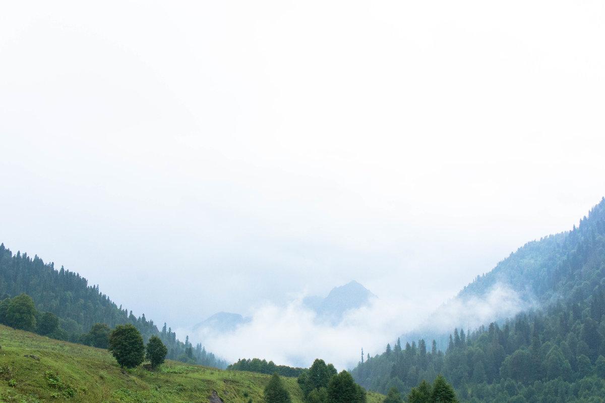 """""""альпийские луга"""" после дождя - Андрей Наумов"""