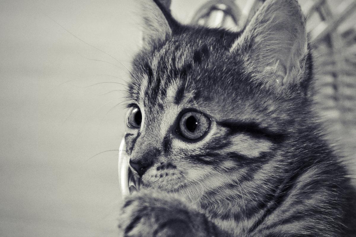 кошка Мурыська - Olena