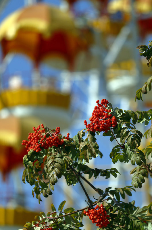 Осень - Сергей Елесин