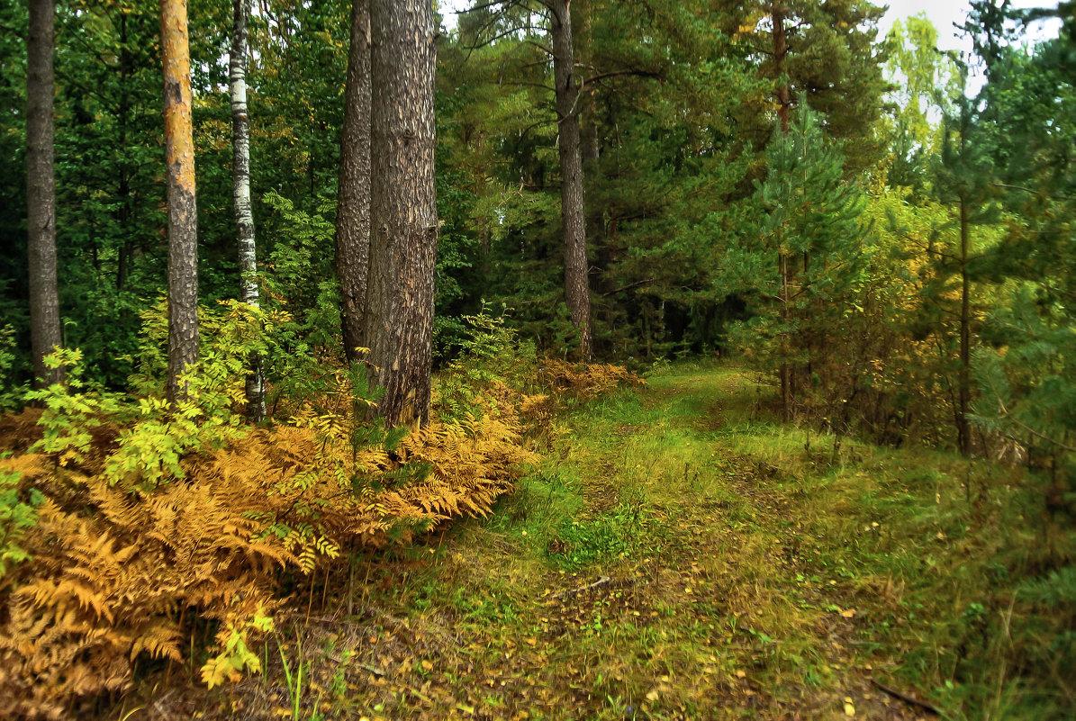 Лесными дорожками... - Алла Кочергина