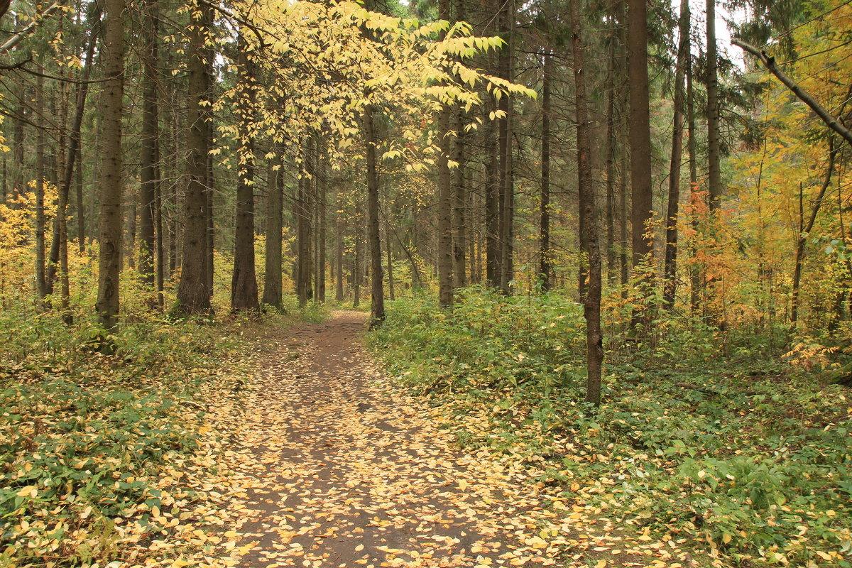 Осенняя тропа. - Наталья