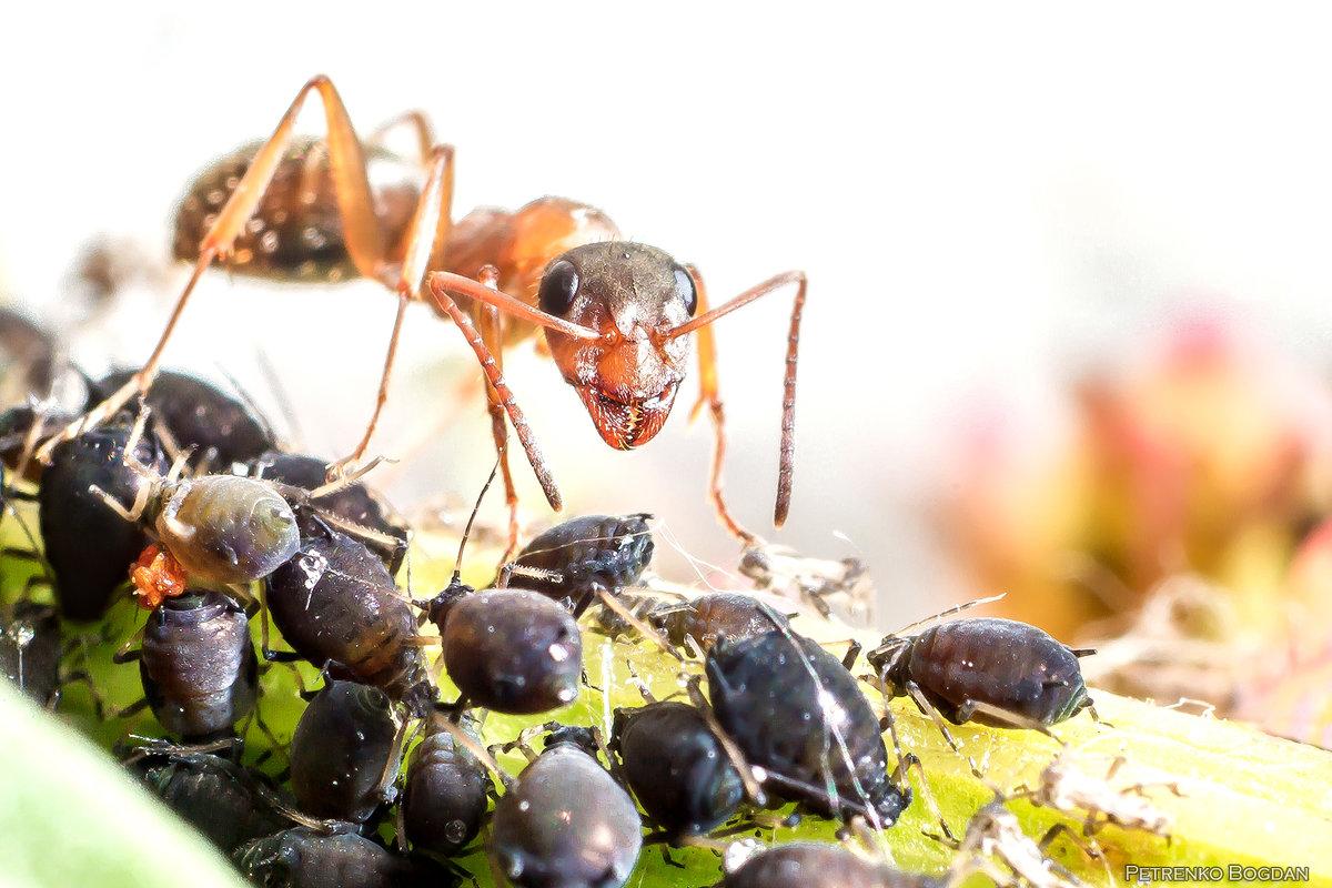 В мире насекомых) - Богдан Петренко