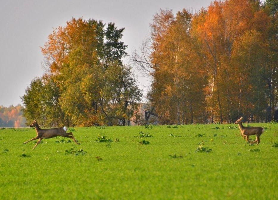На опушке леса в сентябре... - Геннадий Ячменев