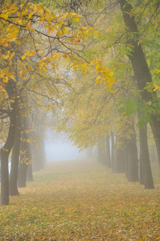 Туман в осеннем парке - Сергей Тагиров