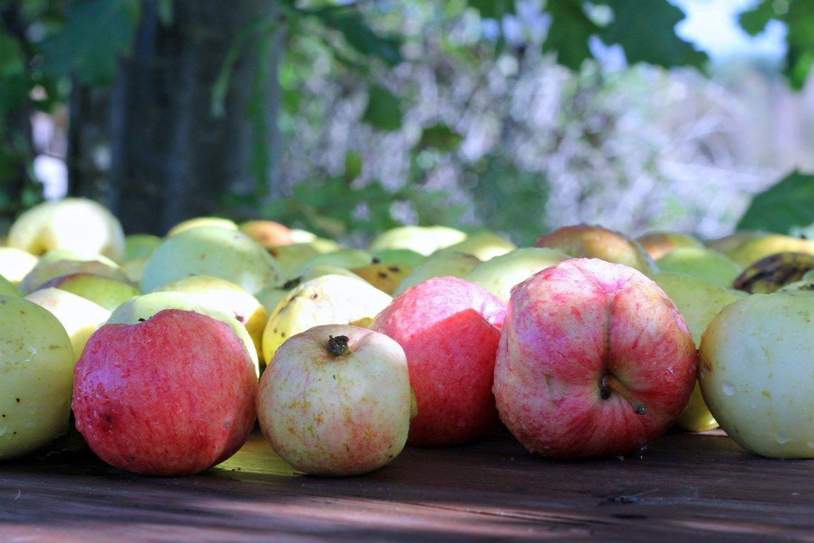 Яблочная свежесть - Наталья