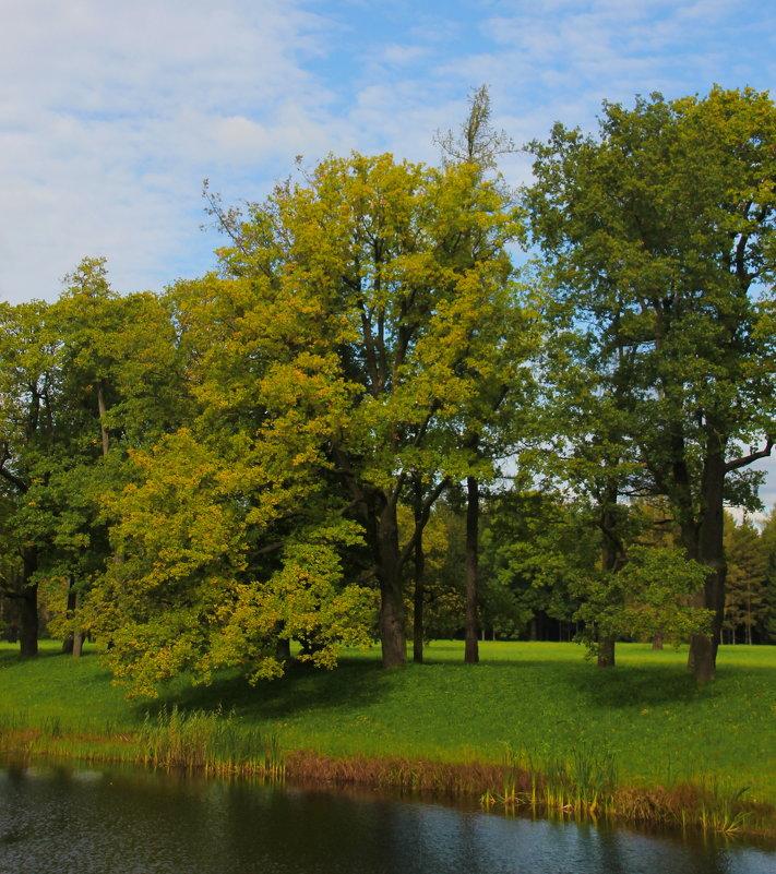 И осень в парк пришла.... - Tatiana Markova