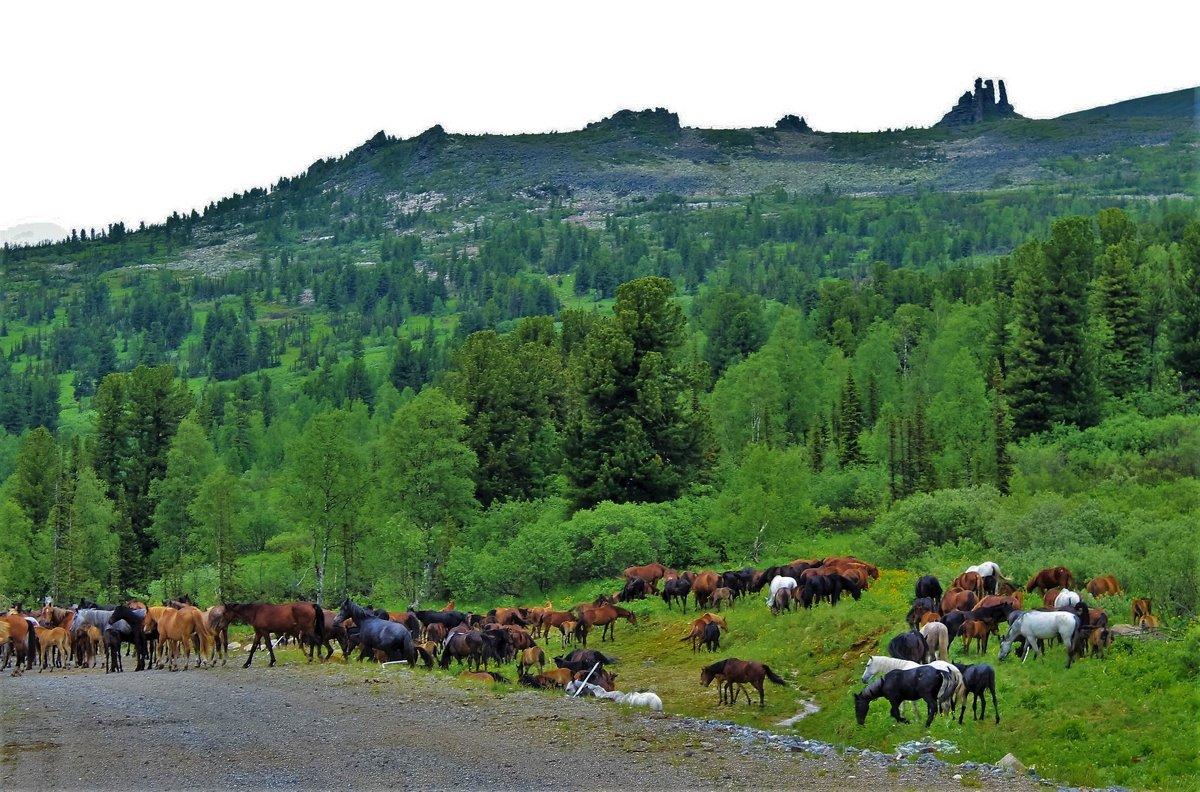 Табун в горах - Сергей Чиняев