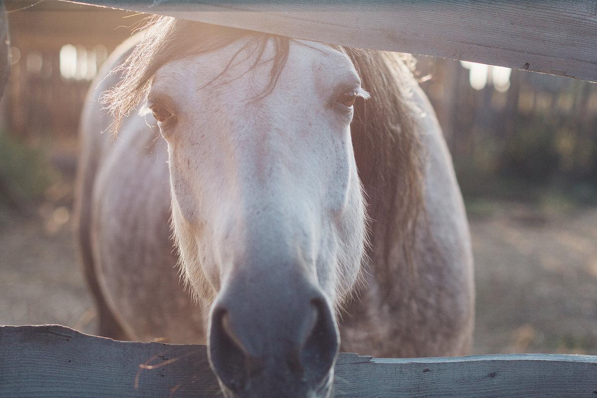 Конь в закате - Александр Решетников