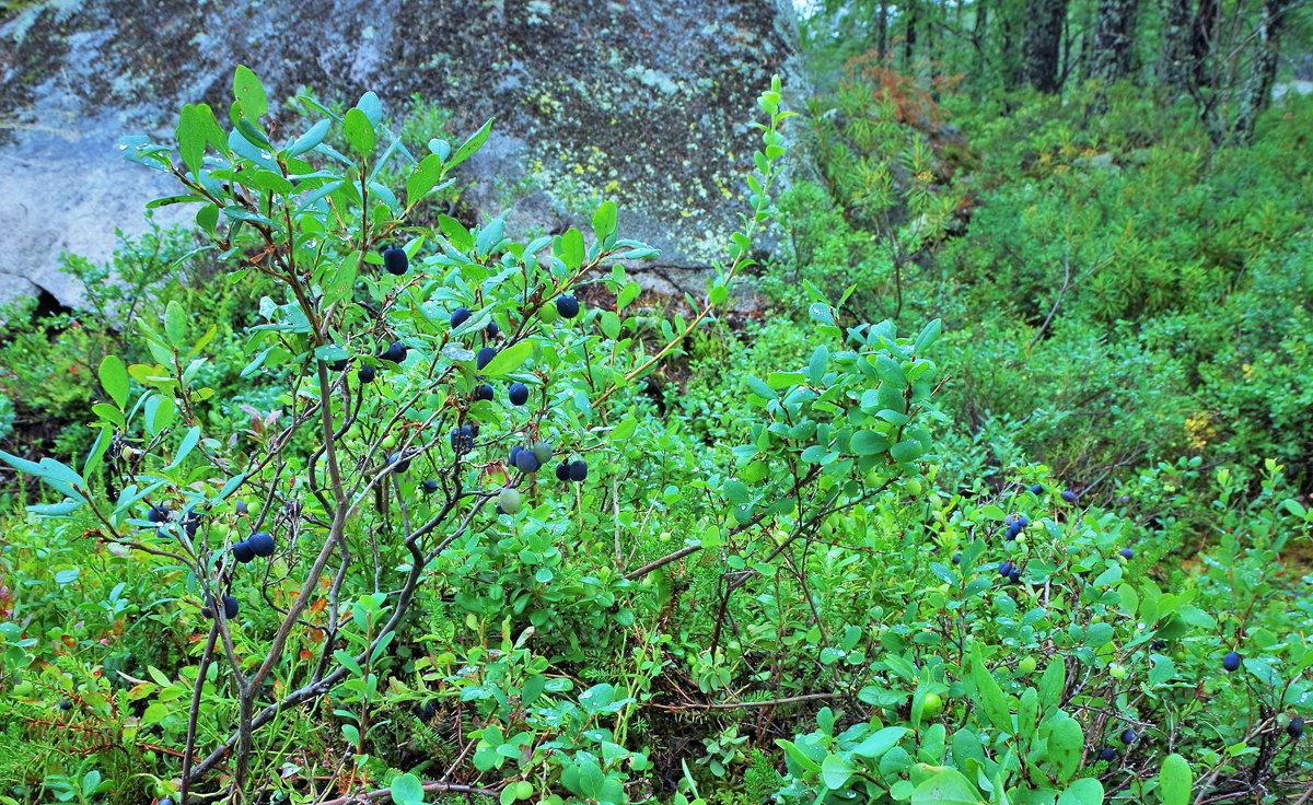 В лесах Прионежья - Валерий Талашов