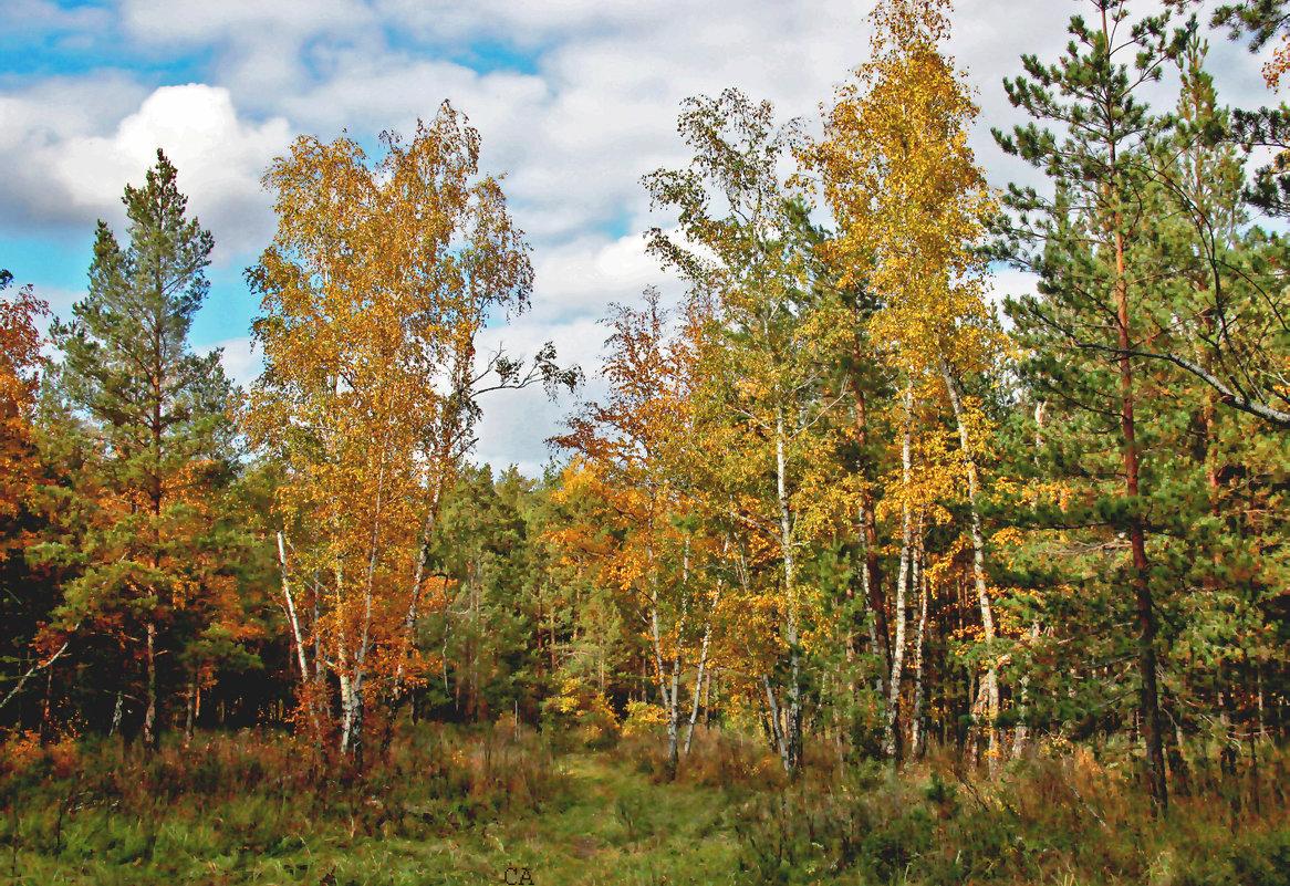 Осенняя картинка - Александр Садовский