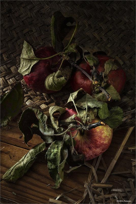 Яблоки - Алексей Путинцев