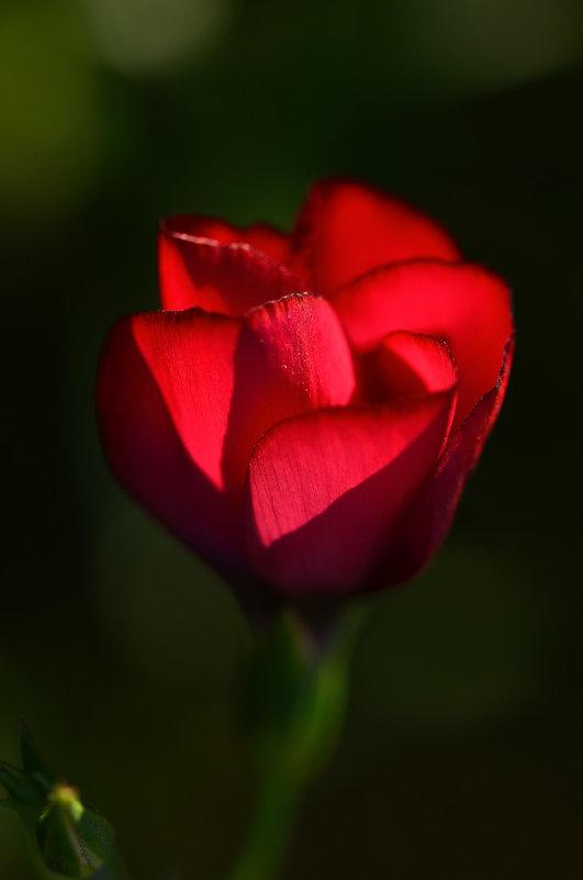 Аленький цветочек - Татьяна Соловьева
