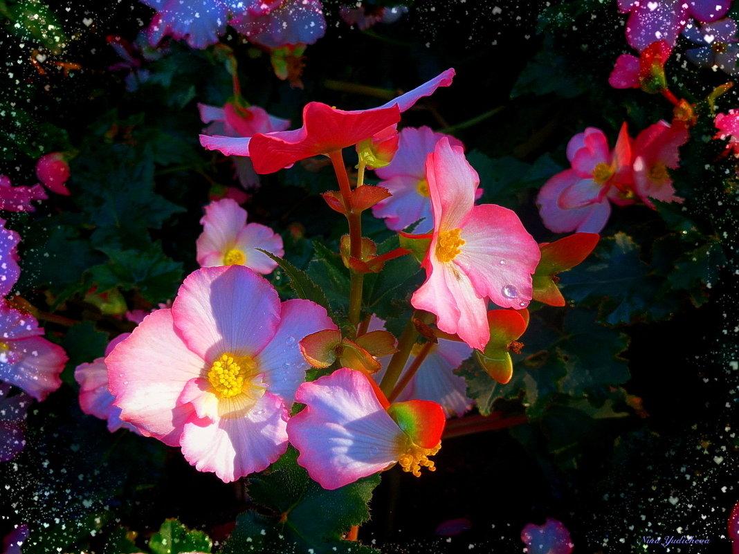 Парк цветов осенью (серия) Капельки росы - Nina Yudicheva