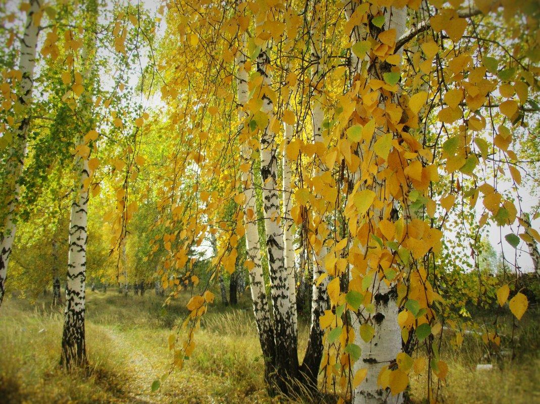 Золотая осень... - Valentina