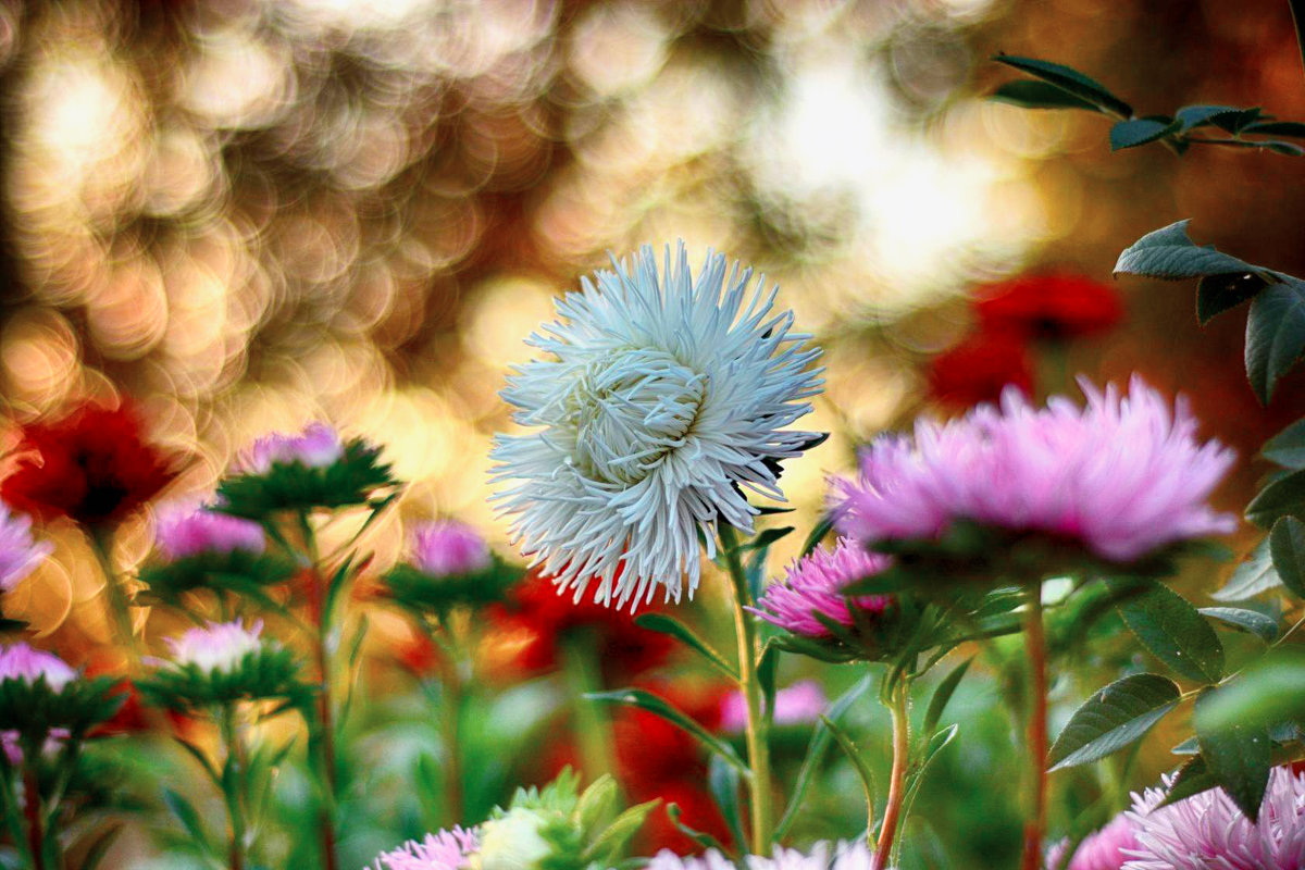Цветы - Юрий Фёдоров