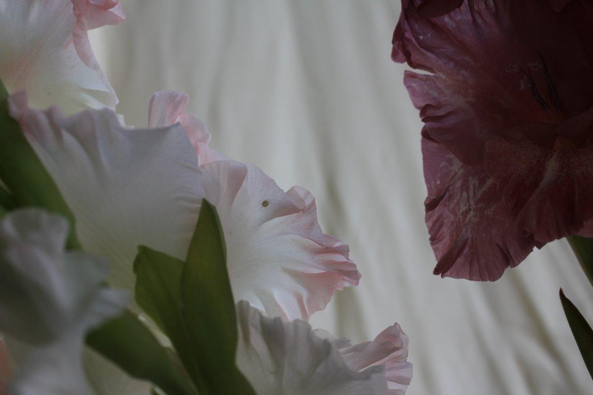 Два гладиолуса - Наталья Золотых-Сибирская
