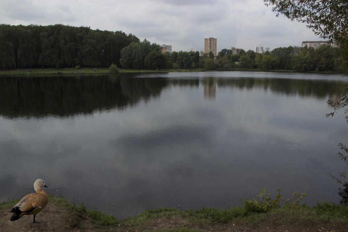 На озере - Elena Ignatova