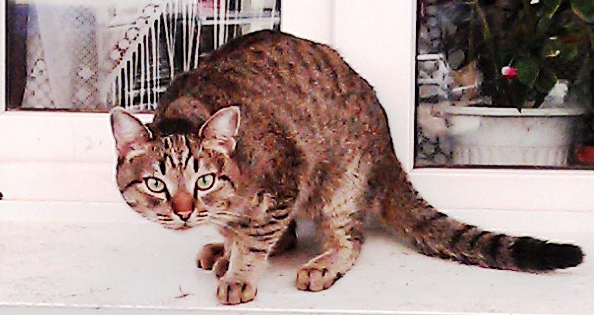 Кот живущий на подоконнике улицы - Владимир Ростовский