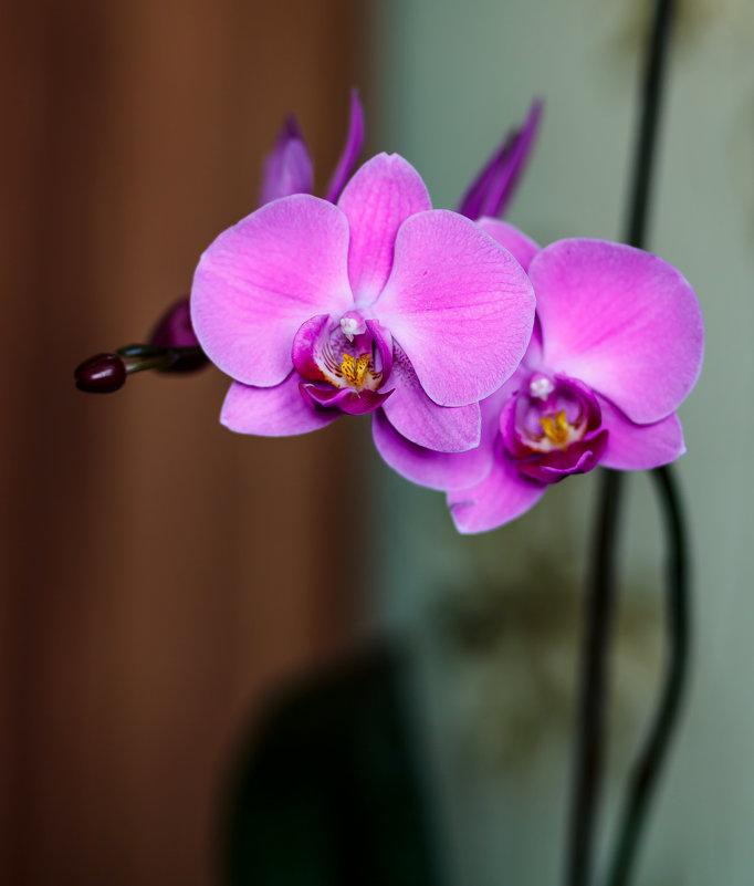 орхидея - Сергей Сол