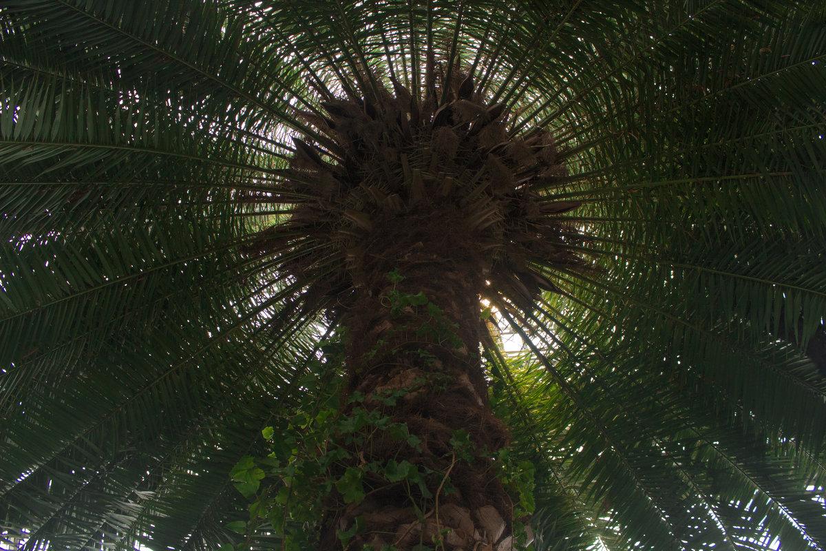 Под пальмой - Ketrin Darm