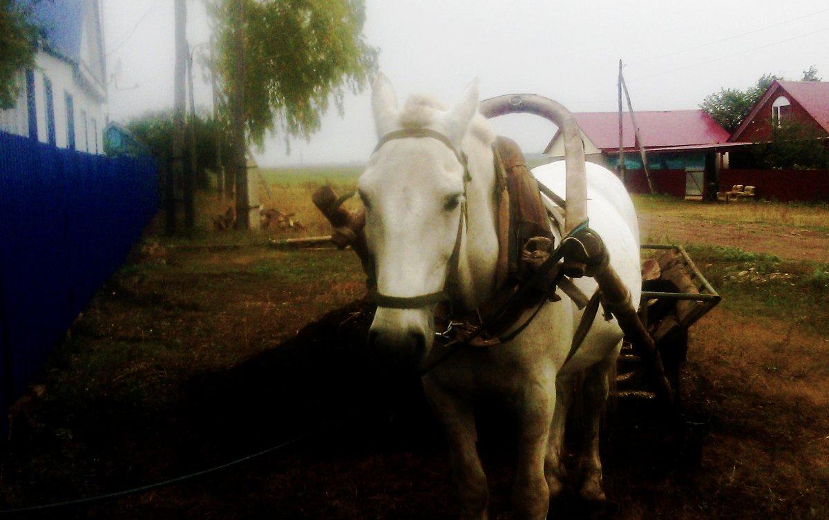Белая лошадь - Владимир Ростовский