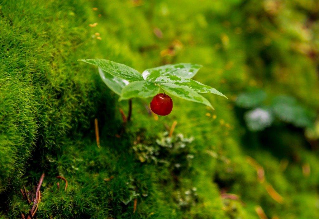 ягодка - Константин Шабалин