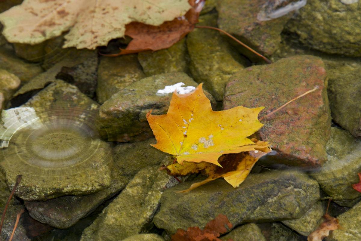 Осень - Виктор М