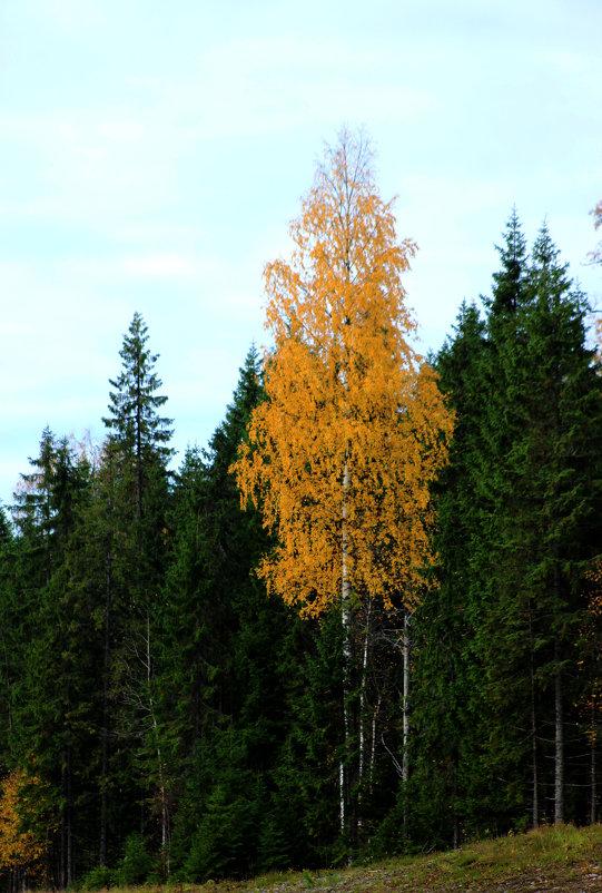 Осень - Андрей Скорняков