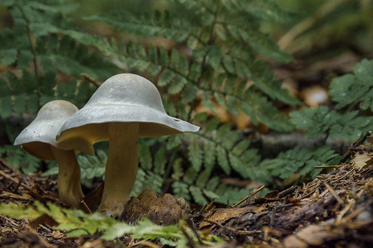 """ Серебряная шляпа "" - Va-Dim ..."