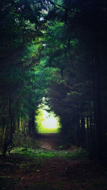 Лесной туннель - Екатерррина Полунина