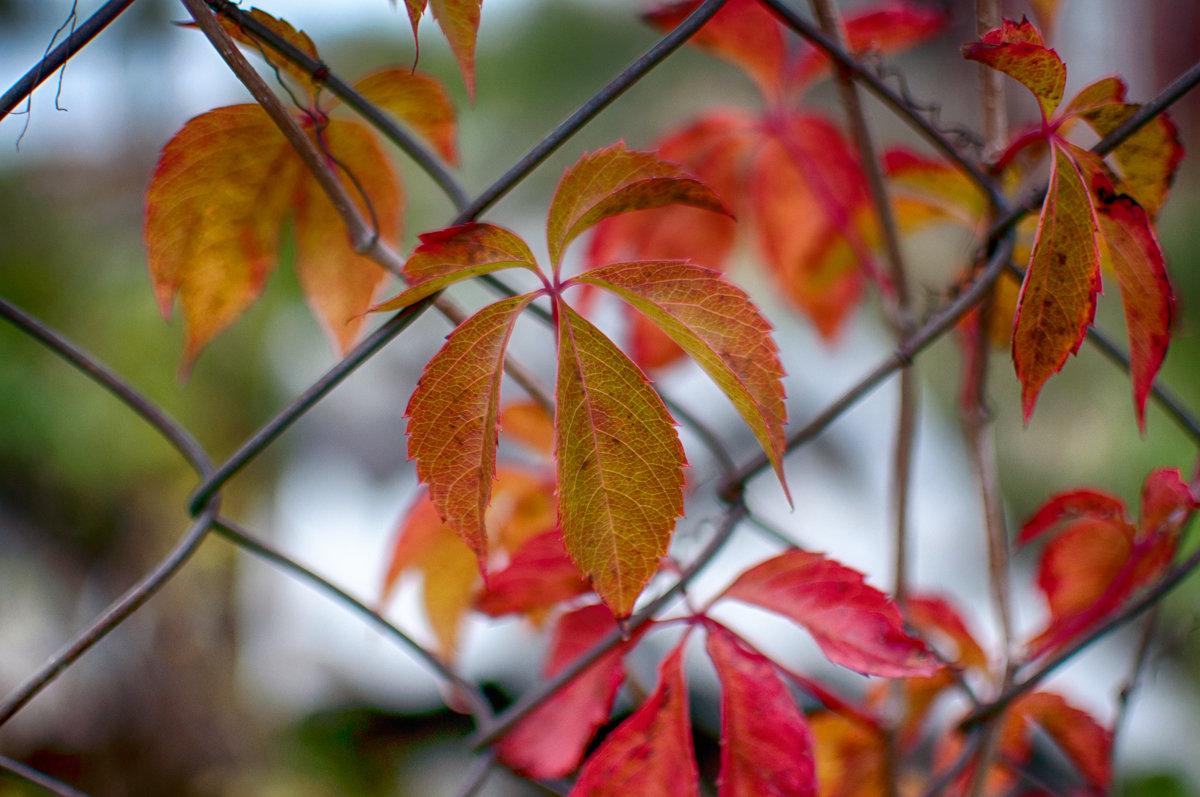 краски осени - Тася Тыжфотографиня